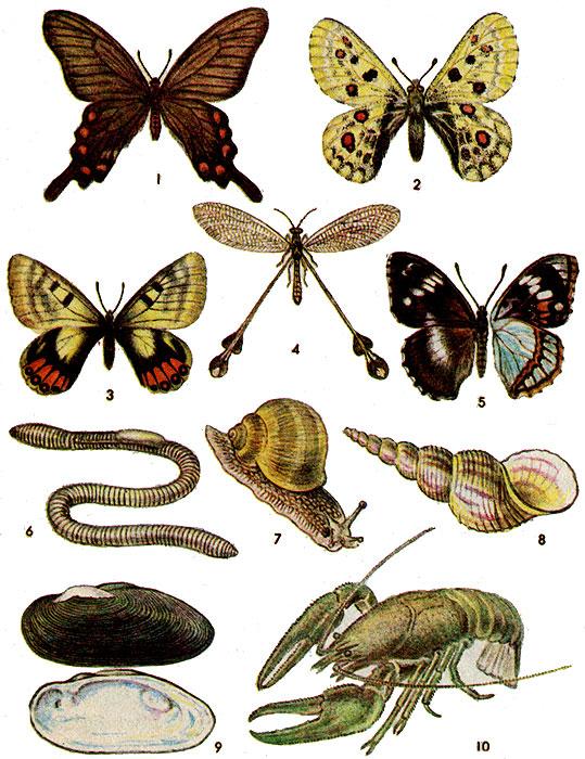 насекомых из красной книги
