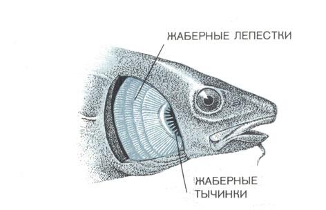 2. Жизнь в водной среде [1975 Оммани Ф. - Рыбы]