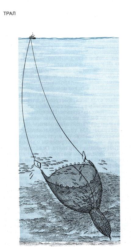 скумбрию ловят тралом