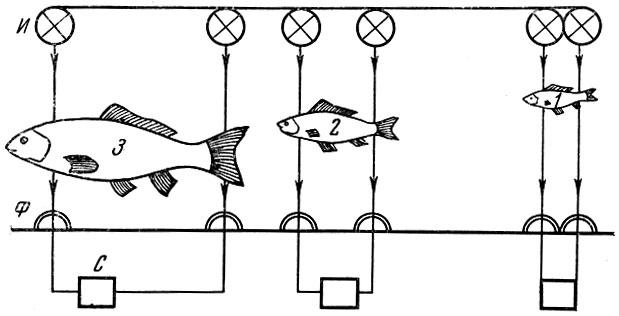 Схема размещения фотоэлементов